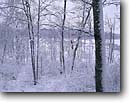 Stock photo. Caption: Red oaks and beaver pond Blacklock Nature Sanctuary Carlton County Minnesota -- tree trees united states america forest forests landscapes landscape midwest midwestern upper north woods snow snowy covered winter snowing