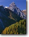 Stock photo. Caption: Larches on Col Mer and il Collac    from Passo Fedara Road The Dolomites Trentino-Alto Adige Region, Italy -- italian countryside fall autumn color colors tree trees european mountain  international travel vacation tourist destination attraction europe landscape landscapes scenics scenic sunny clear blue skies peak peaks mountains time trust solitude