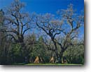 Stock photo. Caption: Reconstructed Miwok Village Indian Grinding Rock  State Historical Park Amador County Sierra Nevada,  California -- native american parks united states america ancient civilization civilizations round houses villages foothills oak oaks tree trees spring huts tepee tepees